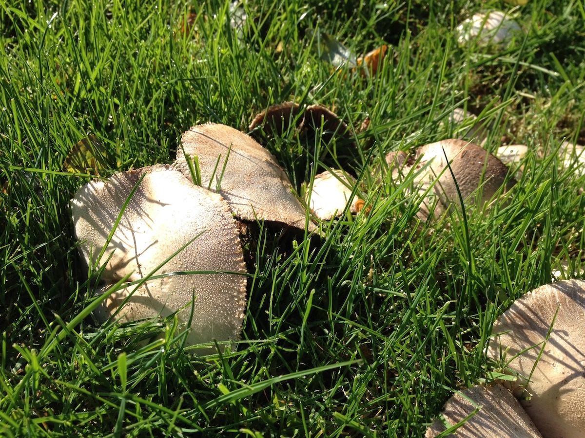 Unknown Mushroom