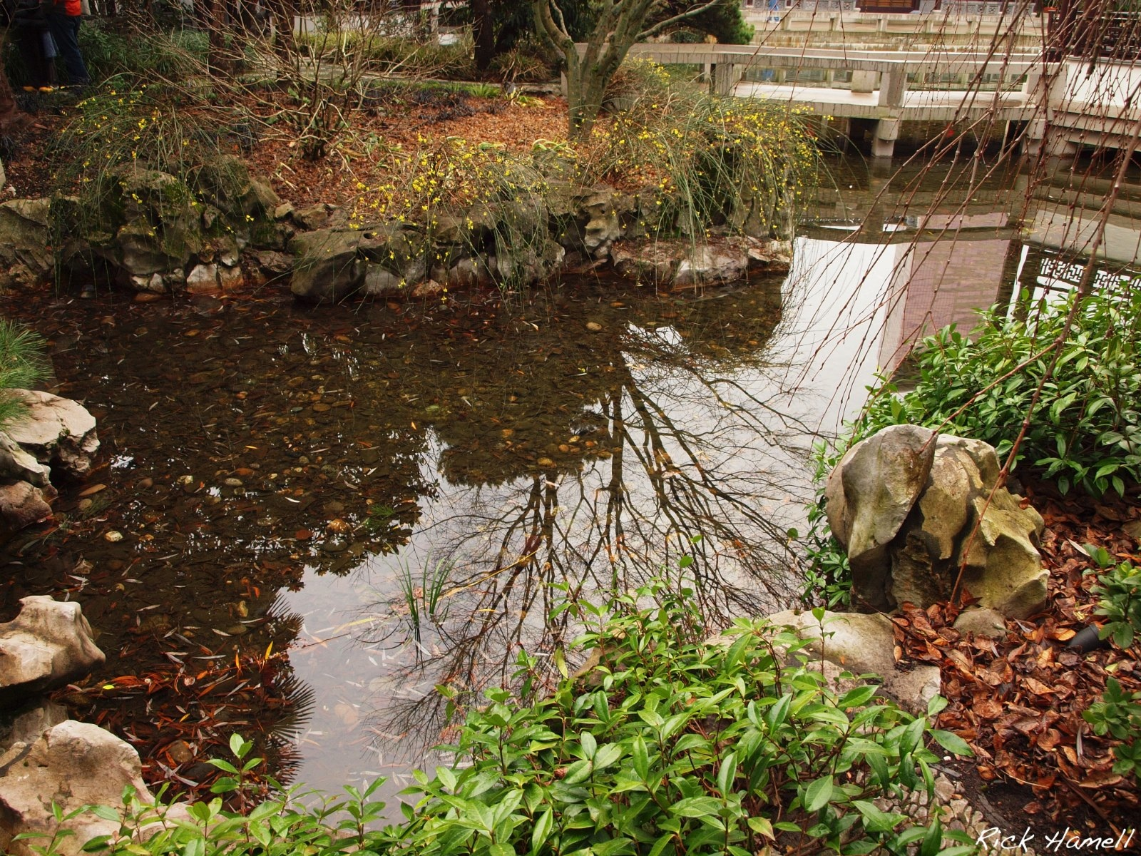 chinese gardens in winter pacific northwest photoblog