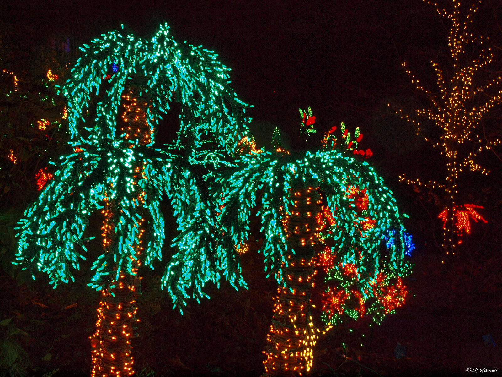 Palm Trees With Christmas Lights Pictures Part - 22: Palm Christmas ... Source: Pnwphotoblog.com