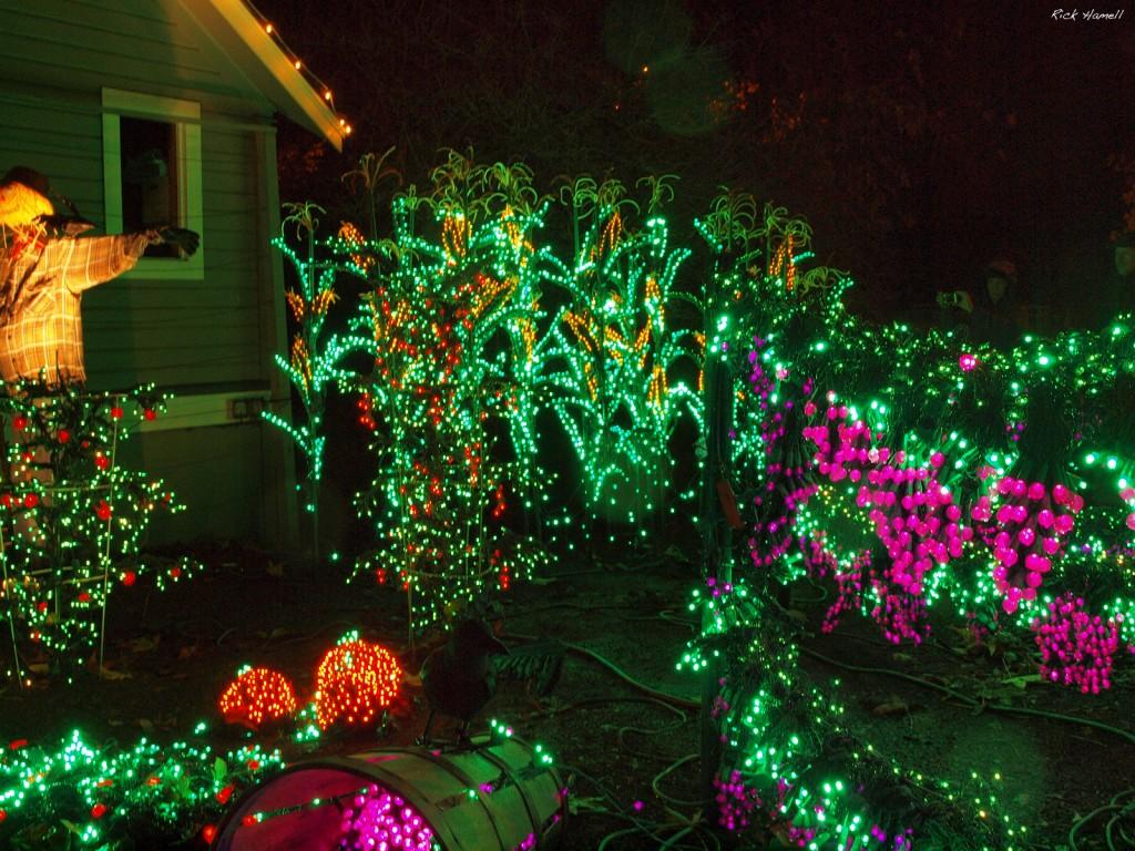 bellevue washington botanical garden lights pacific northwest photoblog